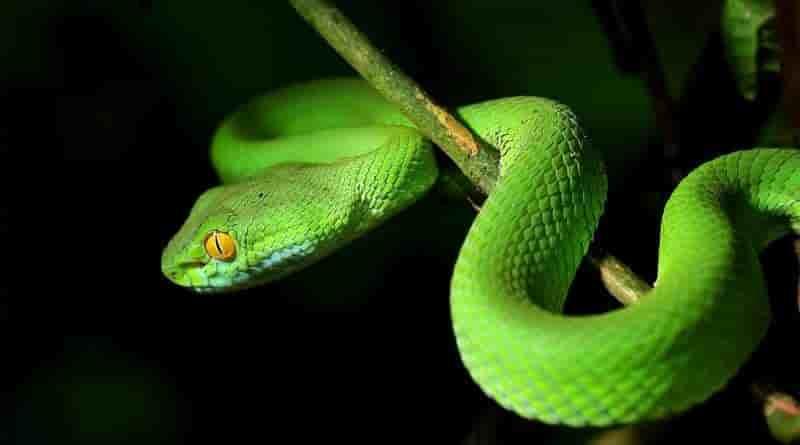 rüyada yılanlar görmek ve rüyada yılan görmek