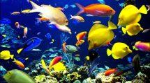 Rüyada balık görmek nedir