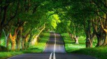 rüyada yol görmek nasıl yorumlanır