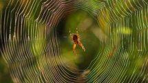 rüyada örümcek görmek nasıl yorumlanır