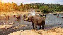rüyada fil görmek ne anlama gelir