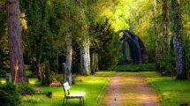rüyada ağaç görmek nasıl yorumlanır