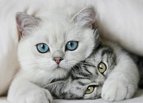 rüyada kedi görmek ne demek