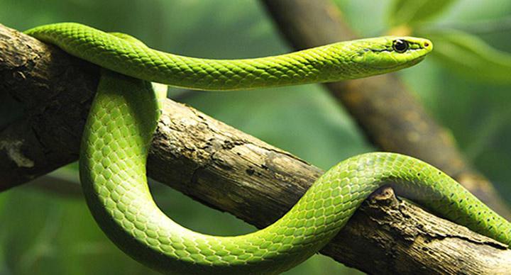 Rüyada yılan görmek nedir