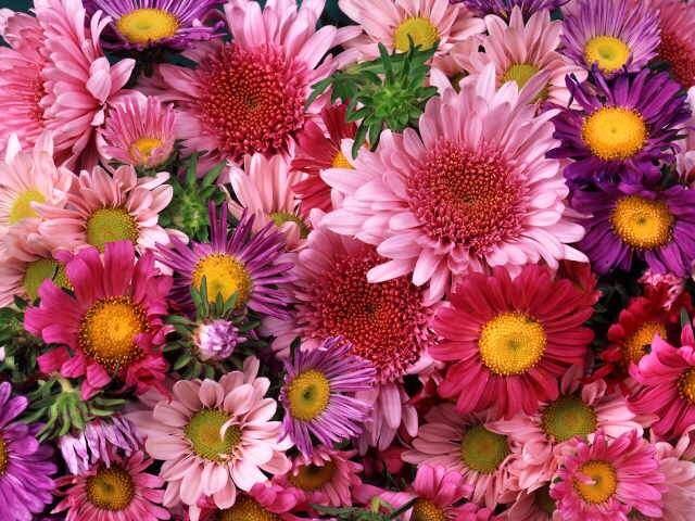 rüyada çiçek görmek ne anlama gelir