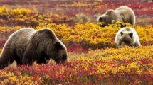 rüyada ayı görmek ne anlama gelir?