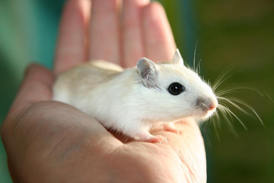 rüyada çok fare görmek