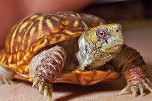 rüyada kaplumbağa görmek