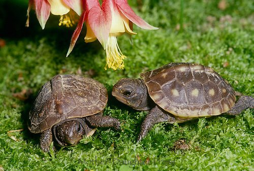Rüyada kaplumbağa yavrusu nasıl yorumlanır